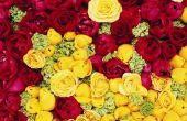Bloemen die sterkte symboliseren