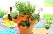Een kruid en sappig tuin planten in een Pot van aardbei