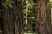 Zones voor Redwoods