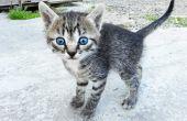 How to Get kat Urine geur uit beton