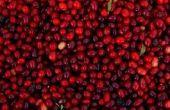 Bijwerkingen van Cranberry pillen