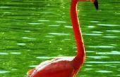Hoe maak je een roze Flamingo kostuum voor Halloween