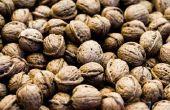 Hoe lang duurt het voor een Black Walnut Tree te rijpen?