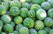 De reden voor zachte watermeloenen