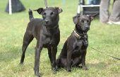 Hoe te voorkomen dat staar bij honden