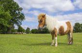 Wat Is de ziekte van Cushing bij paarden?