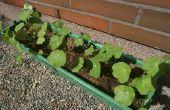 Tuin vakken: Hebben ze hebben gaten in de bodem voor de afwatering?