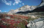De biotische factoren voor alpinetoendra