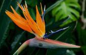 Verschillende soorten bloemen in Nigeria