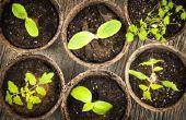 Vier van de belangrijkste delen van een Plant