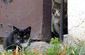 Hoe de zorg voor wilde katten en Kittens