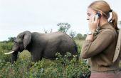 Hoe herken ik het verschil tussen mannelijke en vrouwelijke olifanten