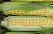 Hoe schil van maïs