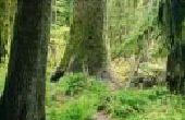 Hoe te onderscheiden van het verschil tussen een gematigde bladverliezende wouden & een tropisch regenwoud