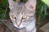How to Keep katten uit kamerplanten