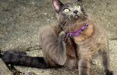 Gemakkelijk & snelle manier om zich te ontdoen van vlooien op uw huisdieren & in uw huis