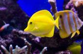 Hoe de zorg voor tropische vissen