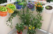 Groeiende eetbare bloemen in Containers
