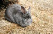 Hoe te behandelen een konijn voor teken