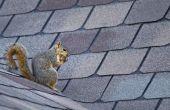 How to Get Rid van eekhoorns op een zolder