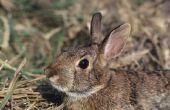 How to Get Rid van konijnen leven onder uw dek