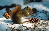 Wat zijn de ziektes & ziekten eekhoorns kunnen krijgen?