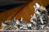 Hoe te stoppen met katten tegen krassen meubels met een huis remedie Spray
