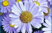 Bloemen die jeugd symboliseren