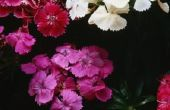 Konijn-resistente kleine grens planten voor volledige zon