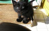 Hoe maak je een kat speelgoed