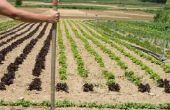 Welke zaden kan ik Plant in de herfst?