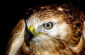 Hoe toe te passen make-up te kijken als een vogel