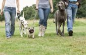 Wat doet het betekent wanneer een hond niet kijken naar een andere hond?