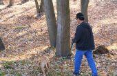 Symptomen van verstopping van de darm in een hond