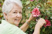 Huren versus kopen voor senioren