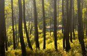 Zijn bomen een hernieuwbare hulpbron?