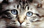 Wat bloed werk doen dierenartsen draaien op katten?