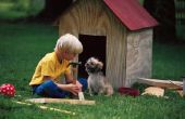 Symptomen van een geblokkeerde darm in een hond