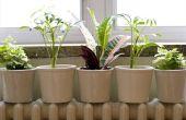 Wat zijn de verschillen tussen de kamerplanten & buiten planten?