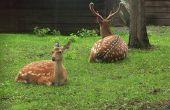 Beschermt mensenhaar uw tuin van herten?