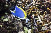 Lijst van herbivoren in de Oceaan