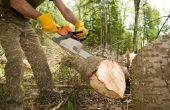 Hoe te maken van een wig gesneden voor het kappen van een boom