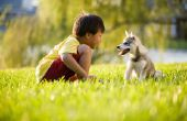 Home Remedies voor honden met een allergie voor gras