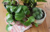 Hoeveel Epsom zout gebruik voor kamerplanten?