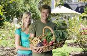 De beste groenten groeien in New Jersey