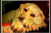 Tekenen & symptomen van eindstadium nierfalen bij honden