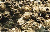 Soorten Marine groei