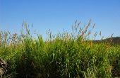 How to Grow gras in Zuid-Californië