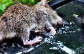Het vrijmaken van een muis van een lijm-val
