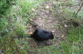How to Kill ratten buiten
